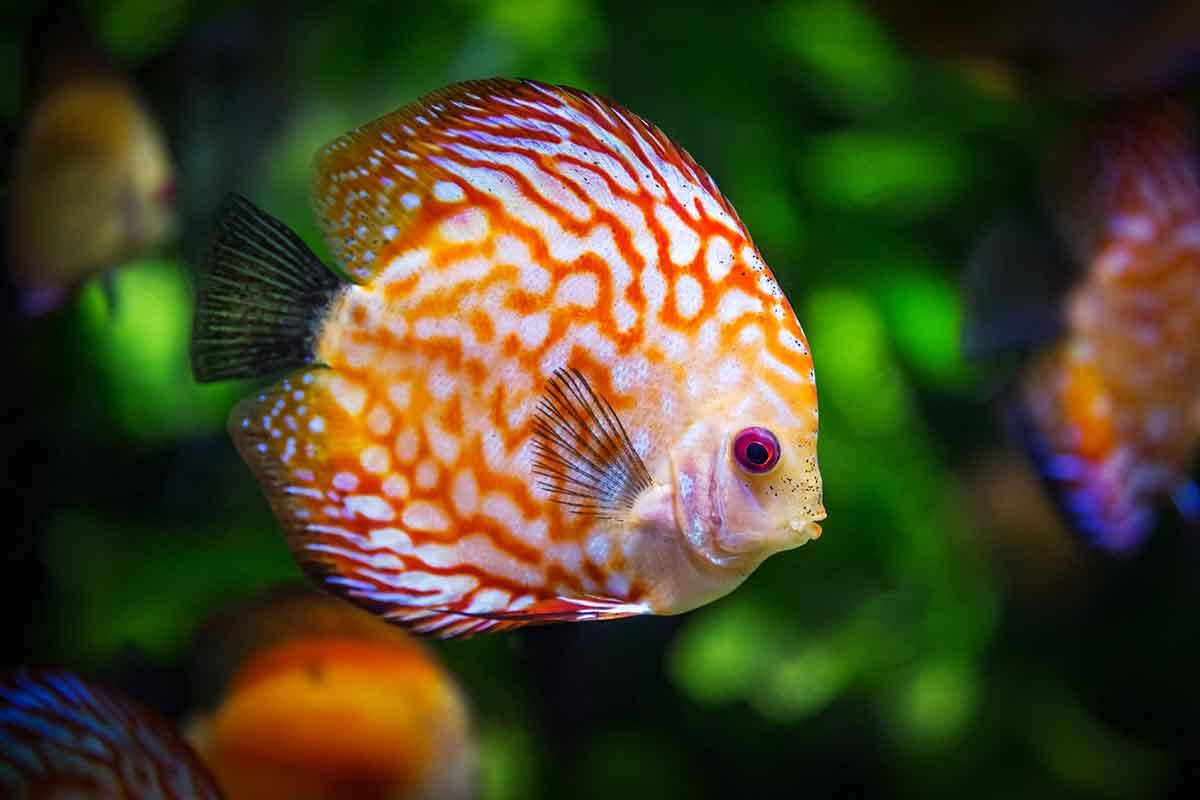Wellness Antiaging Tipps Fisch Spa Erholung